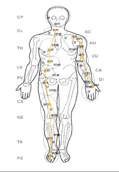 Ciało człowieka opisane wg koncepcji Stecco